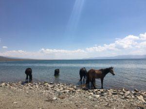 chevaux-son-kul