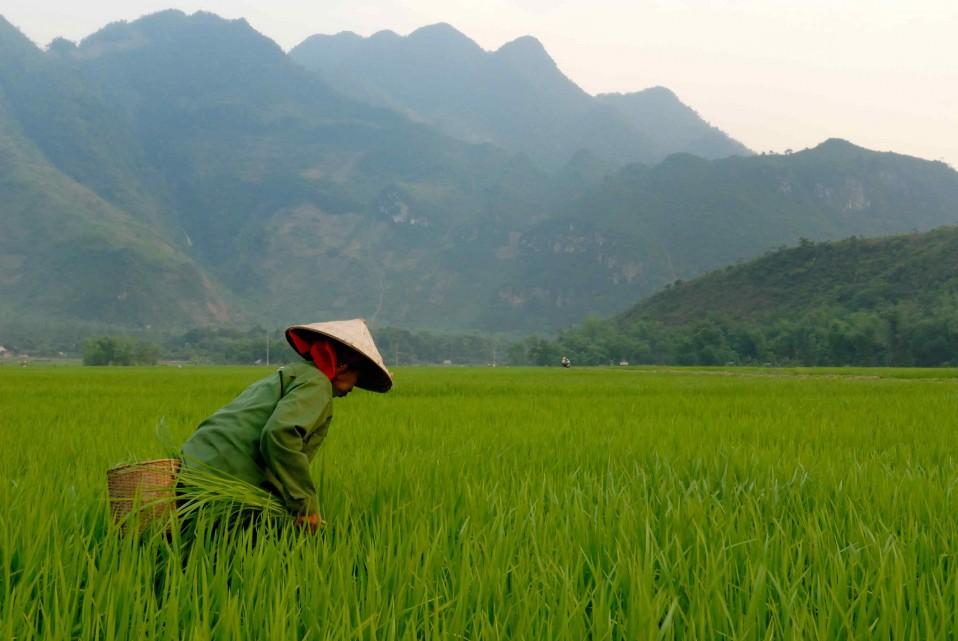 Vietnam: le guide complet pour préparer ton voyage routard en 2020.